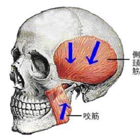 45回専門基礎午前問題53 ~解剖...